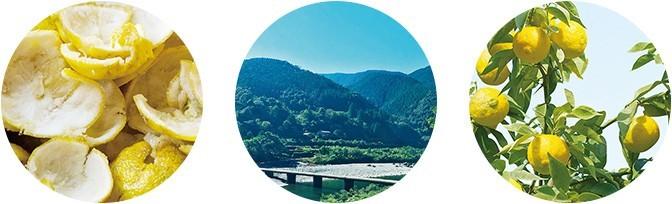 高知県産YUZU